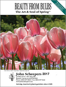 John Scheepers Beauty from Bulbs