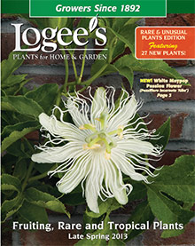 Logee's Greenhouse