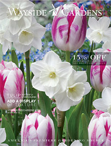 Picture of wayside gardens coupon from Wayside Gardens catalog