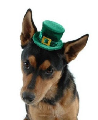 stpaddy_dog.jpg