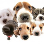 Top ten tips for choosing the right dog from all the dogs needing homes