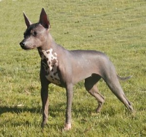 If you don't like hair and shedding a good tip is to find a hairless dog breed