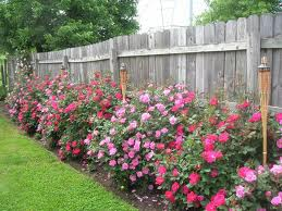 A neighbor tending his roses can be a backyard grilling disaster