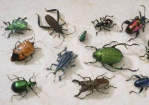 One of the top ten destructive garden pests