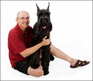 Giant Schnauzers are in the top ten large dog breeds