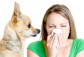 Best of products to get rid of allergies