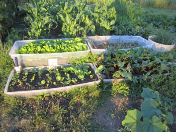 One of the top 10 pointers on how to vegetable garden