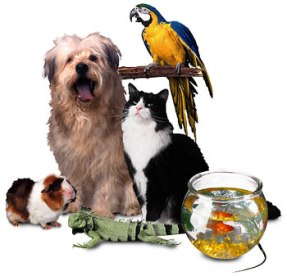 A list of the best of pet supplies stores