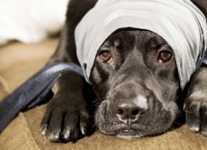 Top 10 signs of an abusive marriage hurting pets
