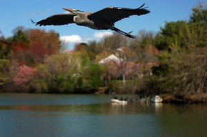Top 10 places to live in Maryland Montgomery Village