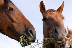 horse nutrition tips