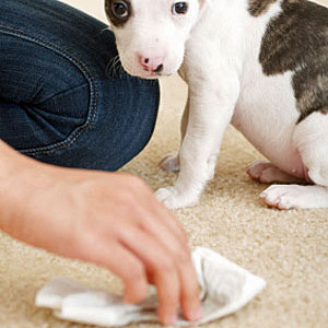 Top 10 things you need for a new puppy dog urine cleaner