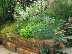 best of flower beds adding herb to flower beds