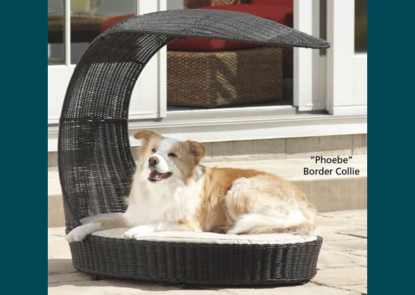 best of ways to spoil your dog chaise lounge