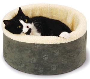 black and white kitten in a bed
