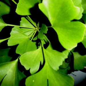 ginko biloba in top 10 new health products