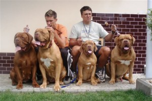 top 10 largest dog breeds Dogue de Bordeaux