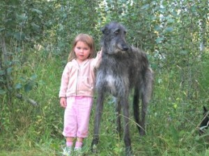 top 10 largest dog breeds Scottish Deerhound