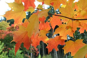 celebrate autumn with gifts