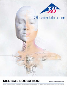 Picture of human anatomical model from 3B Scientific - Medical Education catalog