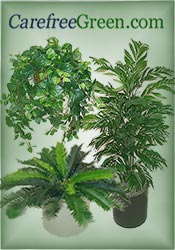 Picture of silk palm trees from CarefreeGreen.com catalog