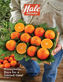 Picture of Florida oranges from Hale Groves catalog