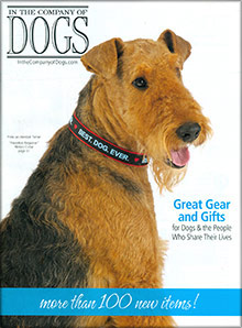 Picture of leather dog harness from Company of Dogs catalog