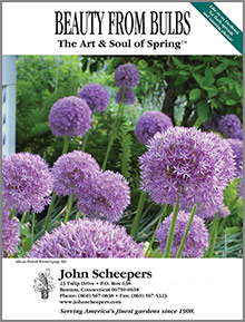Picture of john scheepers from John Scheepers Beauty from Bulbs catalog