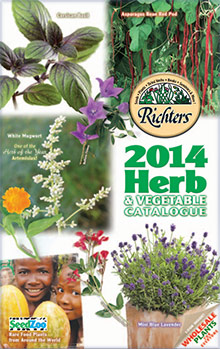 Picture of herb plants for sale from Richters Herbs catalog