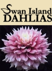 Picture of planting and growing dahlias from Swan Island Dahlias catalog