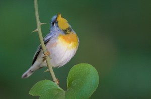 Singing birds are a sign of Spring