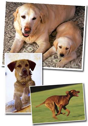 List of the top ten most popular dog breeds