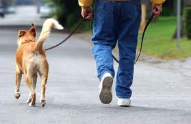 A great spring fitness tip is to get out and walk the dog