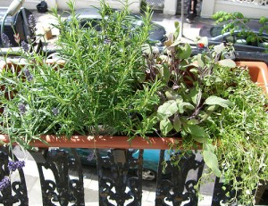 Welcome spring with the gift of an entire herb garden