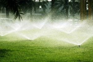 Less lawn sprinkling helps conserve water