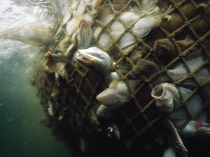 Overfishing is one of the top ten environmental disasters caused by humans