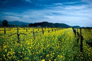Napa wine country is in the top ten spring road trip destinations