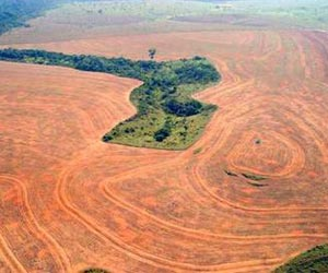 Rainforest destruction is one of the top ten environmental disasters caused by humans