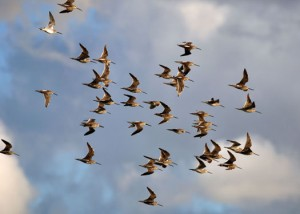 Birding is one of the top ten ways to get in touch with nature