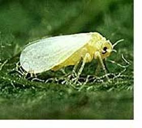 One of the top ten destructive garden pests