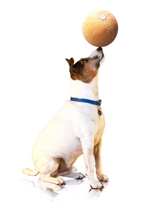 A list of the top 10 cool tricks to teach your dog