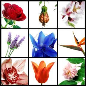 A list of the top ten summer wedding bouquet designs