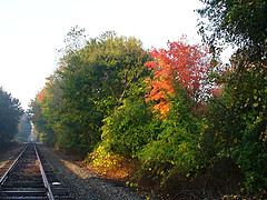 One of the top ten fall foliage