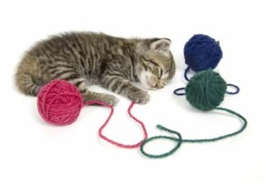 One of the best of interactive cat toys