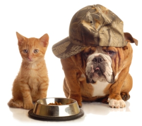 One of the best of dog and cat foods