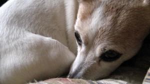 A list of the top ten unique dog names