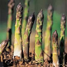 asparagus and parsley