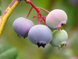 antioxidants for youthfulness