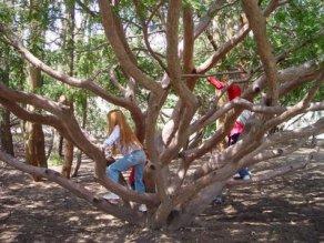 tree climbing tips