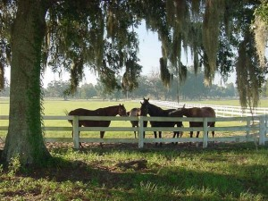 top 10 places to live in Florida Ocala